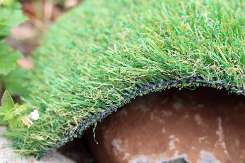 pet-grass55