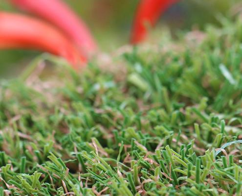 star-grass-main2